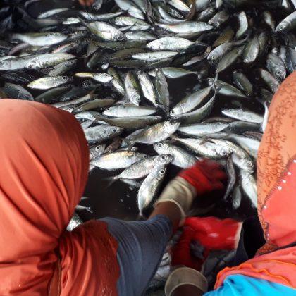 טיול  מסעדות שרפרפים ומזחי דייגים – פרק שני: ים אנדמן