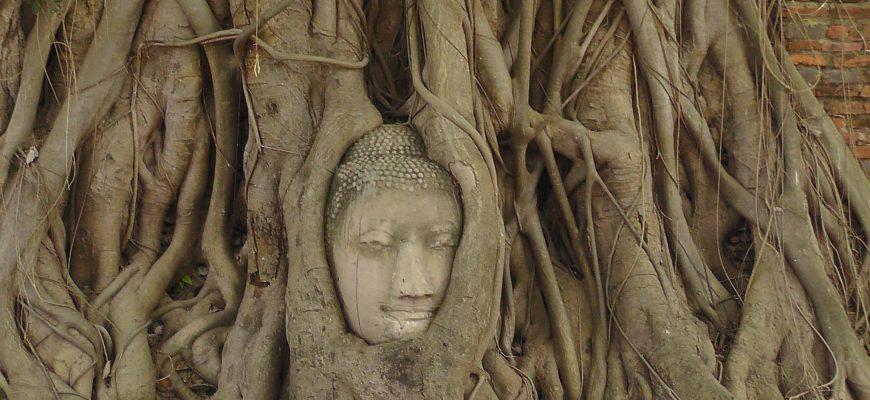 הזמן עושה את שלו :  הבודהה שבתוך העץ בואט מהטט איוטאיה