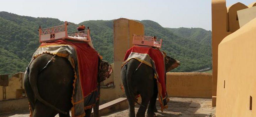 לרכוב על גבם של פילים מסכנים