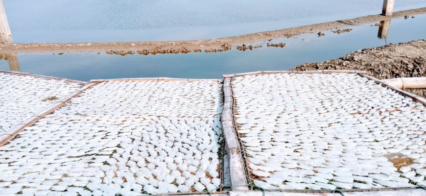 מלח, שמש ודגים מיובשים