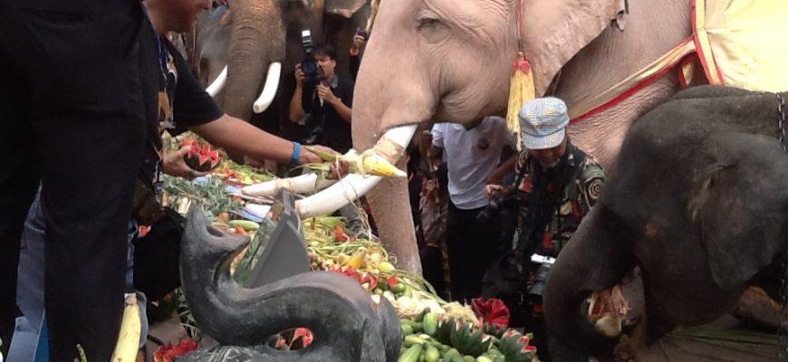 פסטיבל מפיל : פסטיבל הפילים בסורין